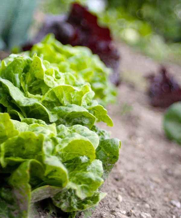 produce-17